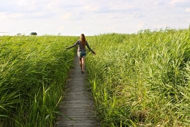 high-grass-1504278_960_720[1]
